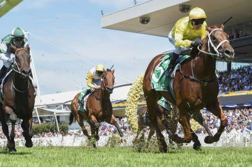 Thoroughbred Racing Horses Jockey Sport Racehorse