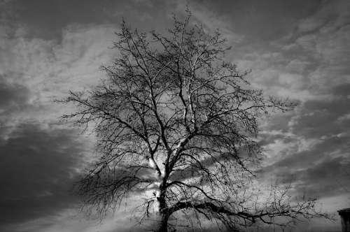 Tree Black Nature Dark Winter Landscape