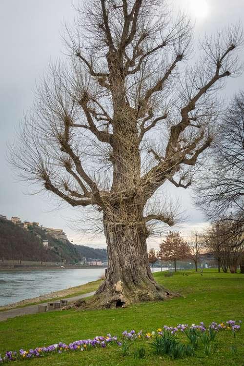 Tree Park Rhine Koblenz Flowers
