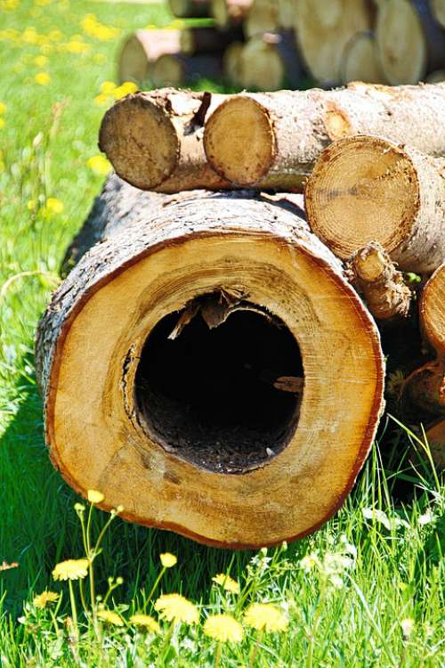 Tree Tribe Forest Nature Wood Log Annual Rings