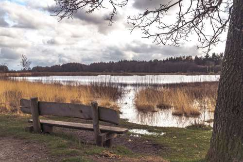 Tree Water Bench Scenic Landscape