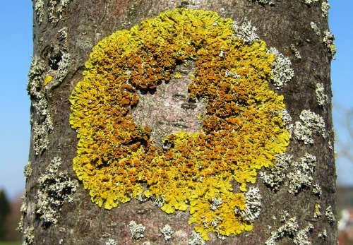 Tree Log Mushroom Lichen Nature Moss Plant
