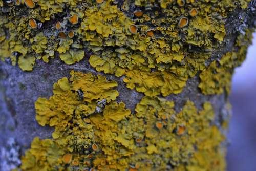 Tree Moss Lichen Nature Tribe