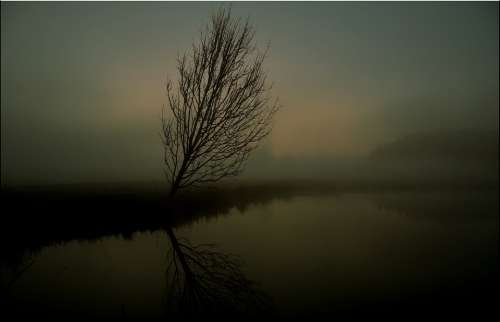 Tree Fog Sunrise Haze Scenic Mystical Water Lake