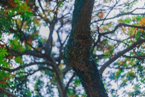 Tree Planting Rain Spring Color