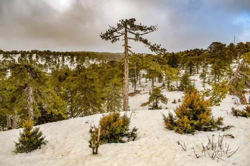 Trees Mountain Snow Winter Landscape Nature