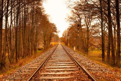 Trees Autumn Railway Track Forest Landscape
