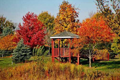 Trees Gazebo Fall Nature