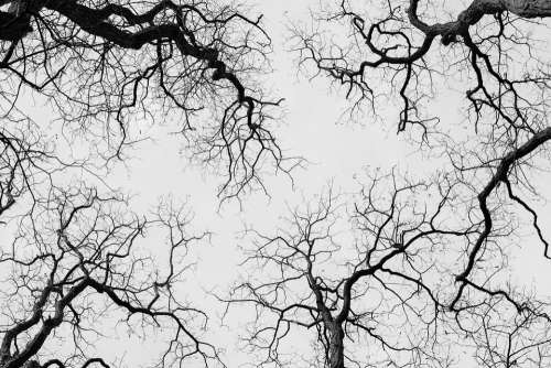 Trees Treetops Highinthesky Nature Black And White