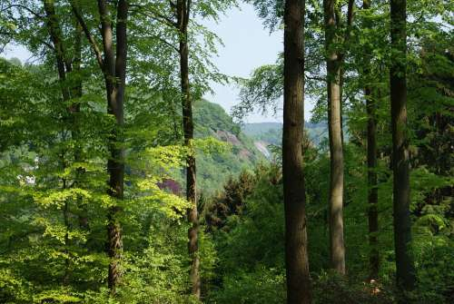 Trees Landscape Forest Arboretum Belgium