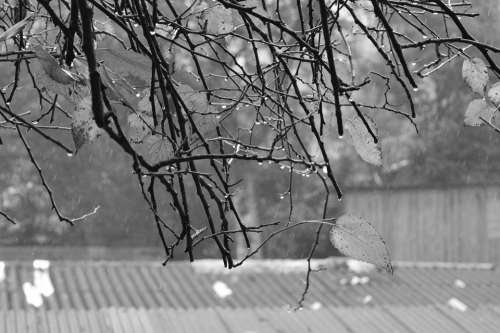 Twigs Raindrops Rainy Day Branch Water-Drop