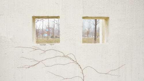 Walls Windows Plants Texture