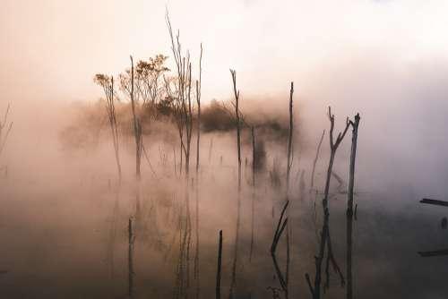 Water Sunset Trees Plant Bushes Fog Twilight