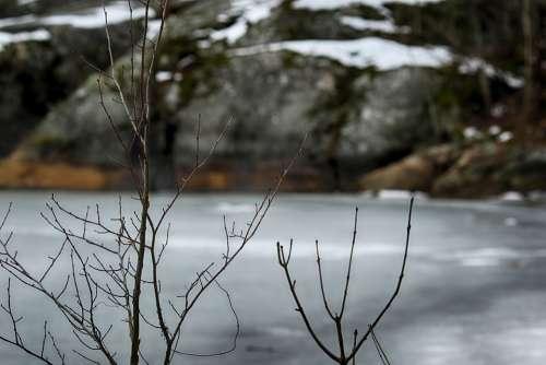 Water Sea Tree Landscape