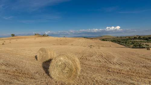 Wheat Field Villar De La Mare Agriculture Summer