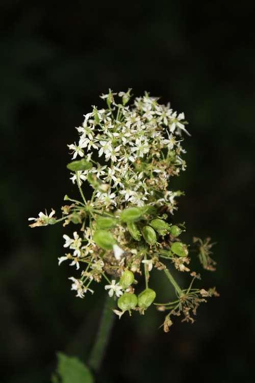 Wild Flower Nature Summer Seeds Pointed Flower