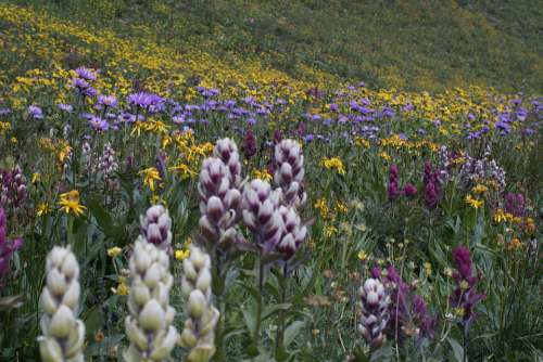 Wildflower Nature Lake Mountain Wildflowers Flower