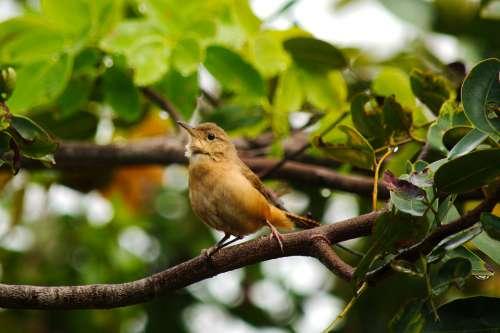 Wildlife Bird Birdie Colors Green Natural