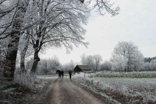 Winter Wintry Ripe Nature Cold Trees Winter Magic