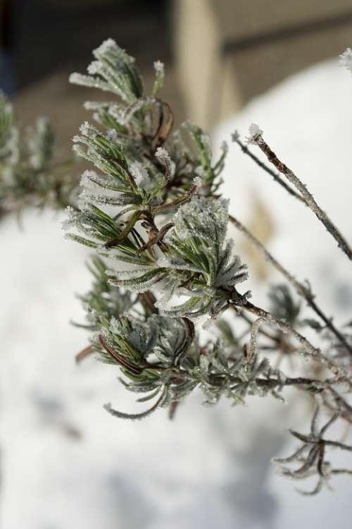 Winter Frost Nature Eiskristalle Winter Magic
