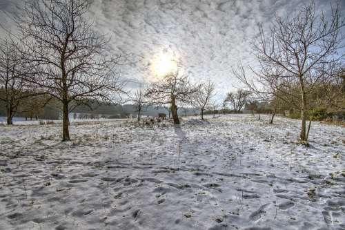 Winter Orchard Snow Sun Fruit Tree