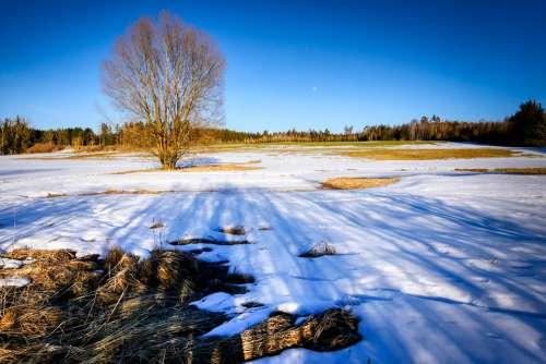 Winter Nature Landscape Wintry Mood Cold Sky
