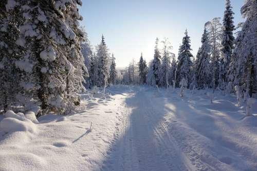 Winter Snow Trees