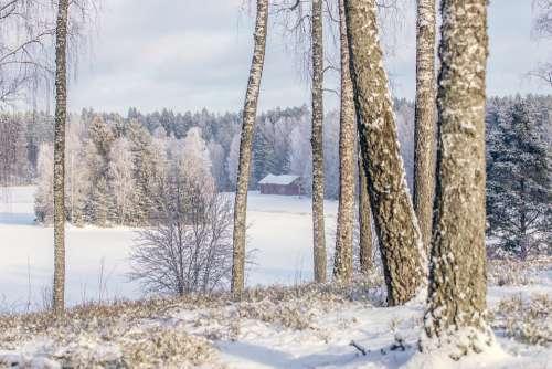 Winter Winter Landscape Nature Snow Cold Landscape