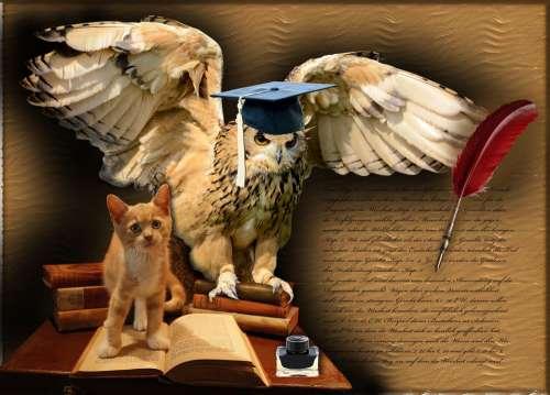 Wisdom Owl Bird Animals Books Ink Cat Text Cap
