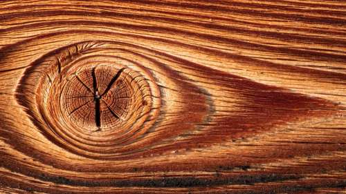Wood Structure Texture Surface Annual Rings