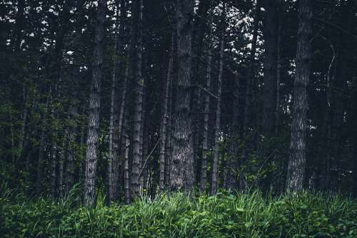 Woodland Scene Dramatic Forest Trees Wallpaper