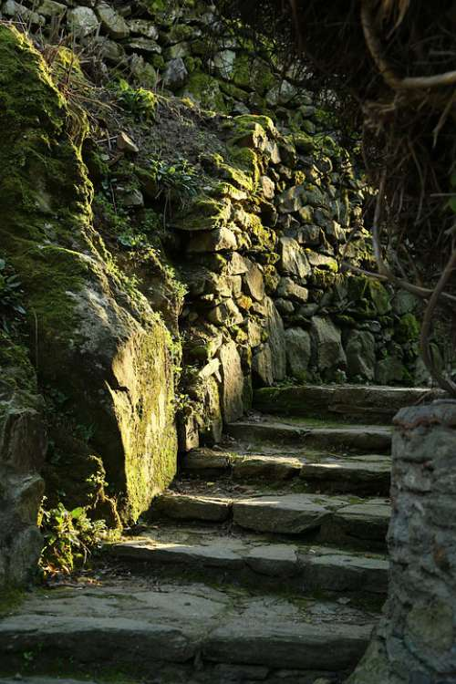 Woods Forest Stone Stairs Mossy Stairs Moss