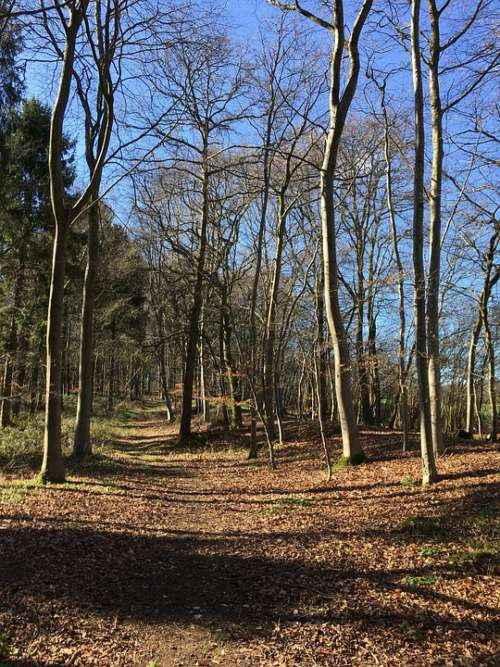 Woods Woodland Path Walk Trees