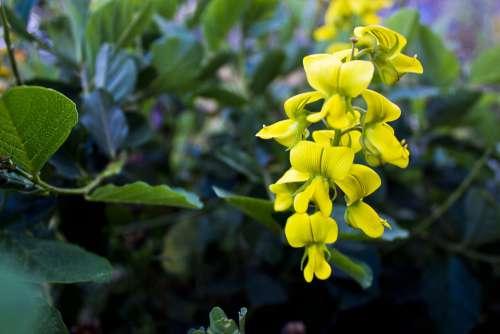 Yellow Flower Flower Wild Flower