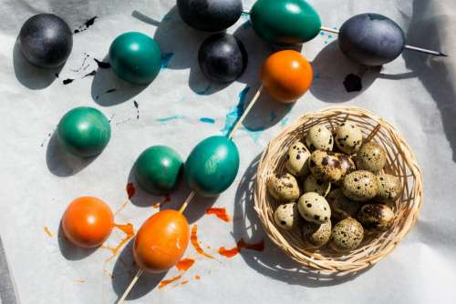 Easter quail and regular colored eggs