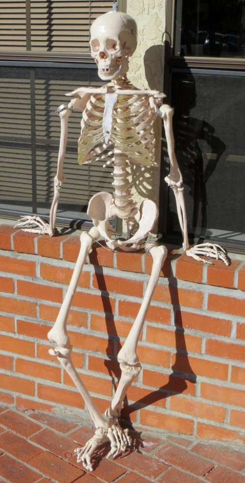 skeleton brick wall bones
