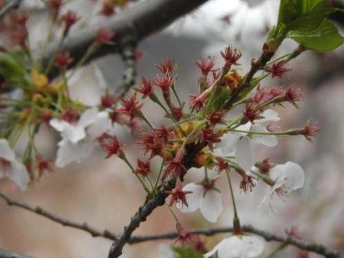 Spring spring bloom spring blossom blossom flowers