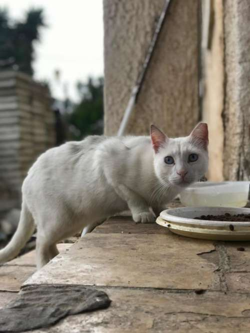 white cat feline pet stairs