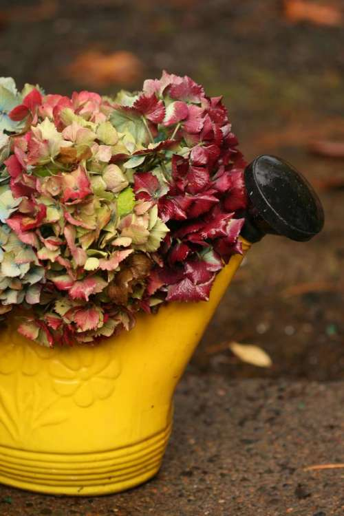 watering can flower bouquet floral Hydrengea