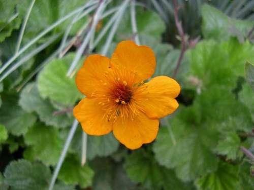 orange flower foliage green delicate