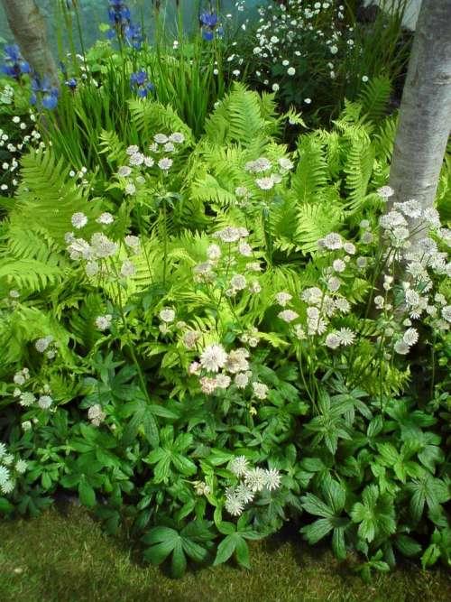 Ferns flowers green white blue