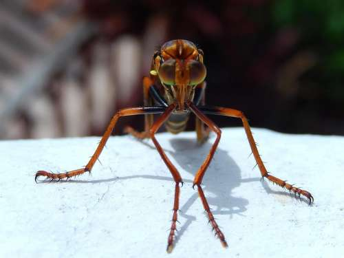 insect tropical close up #creatures