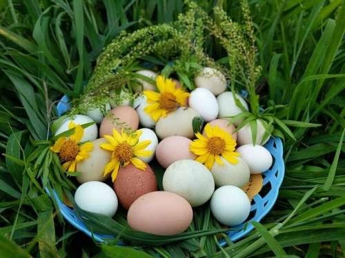 eggs egg easter easter basket basket