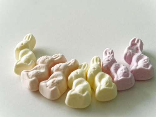 food rabbit orange sweet pink candy yellow sweet