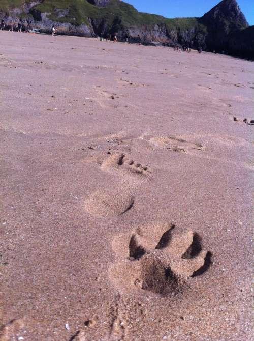 footprints paw prints sand beach dog