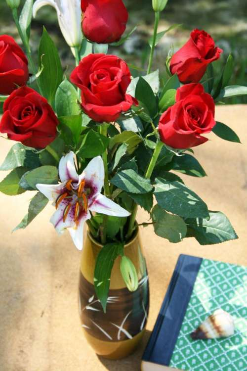 roses rose red rose   lily books