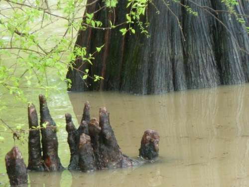 Bayou bog swamp water reflection