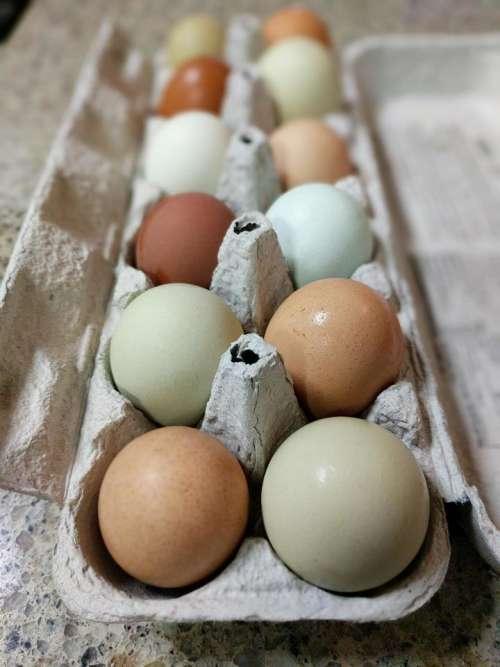 eggs egg carton farm fresh eggs white