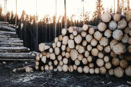 Pile of Felled Wood Logs