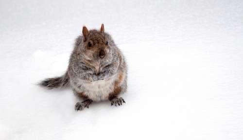 Animal Squirrel Cute Park Snow Good Looking